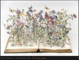 wild flowers of the british isles - su blackwell